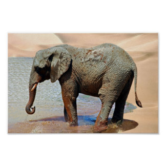 An Elephant at water Poster