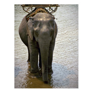 An elephant in the north, Thailand Postcard