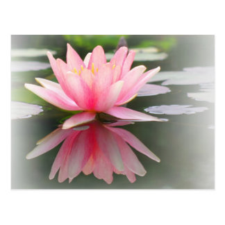 An Enchanting Water Lily in a Pond Postcard