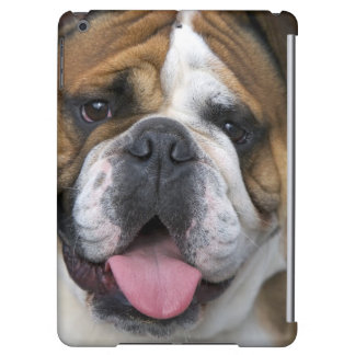 An english bulldog in Belgium. Cover For iPad Air