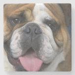 An english bulldog in Belgium. Stone Beverage Coaster