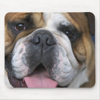 An english bulldog in Belgium. Mouse Pad