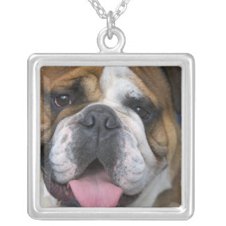 An english bulldog in Belgium. Silver Plated Necklace