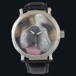 "An english bulldog in Belgium. Watch<br><div class=""desc"">An english bulldog in Belgium   David R. Frazier / DanitaDelimont.com</div>"