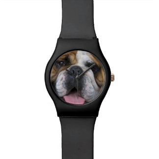 An english bulldog in Belgium. Wristwatch
