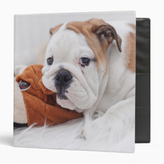 An English Bulldog Puppy Playing With A Bulldog Binder