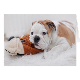 An English Bulldog Puppy Playing With A Bulldog Card