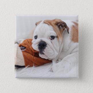 An English Bulldog Puppy Playing With A Bulldog Pinback Button