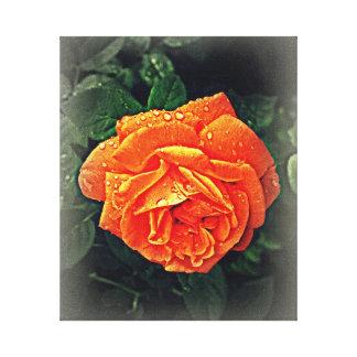 An Evening Rose Canvas Print