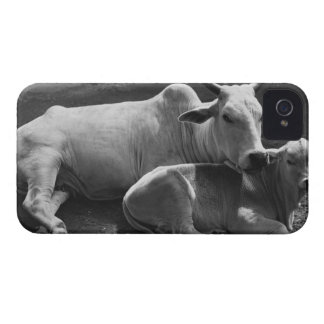 An Indian cow and its calf  lying in a farmyard iPhone 4 Case-Mate Case
