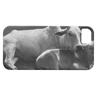 An Indian cow and its calf  lying in a farmyard iPhone 5 Case