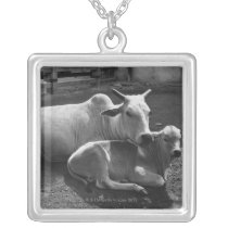 An Indian cow and its calf  lying in a farmyard Silver Plated Necklace