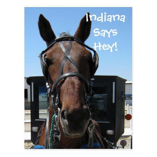 An Indiana Hey! Post Cards