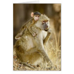 An infant Yellow Baboon(Papio Cards