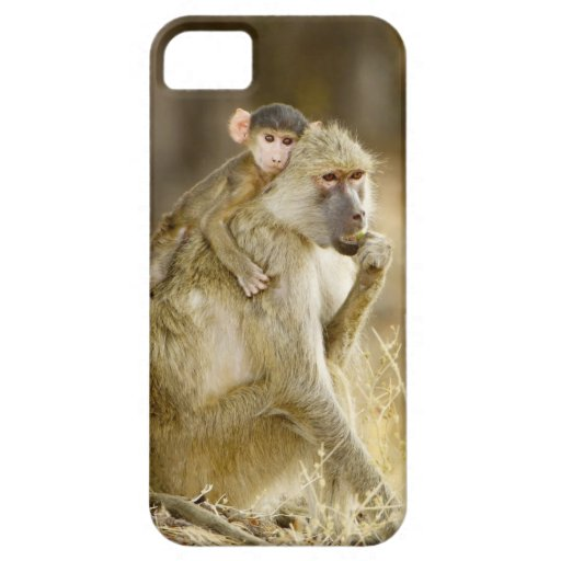 An infant Yellow Baboon(Papio iPhone 5 Covers