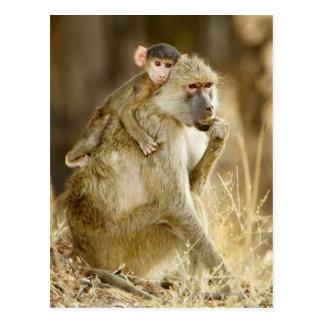 An infant Yellow Baboon(Papio Postcard