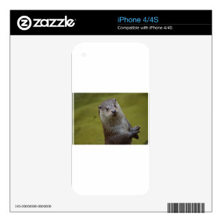 An inquisitive Otter looking for trouble Skins For iPhone 4
