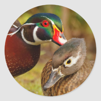 An Inseparable Pair of Wood Ducks Classic Round Sticker