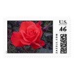 An Irish Flower Postage Stamps