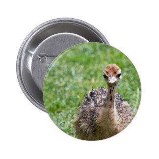 An Isolated Baby Ostrich Button