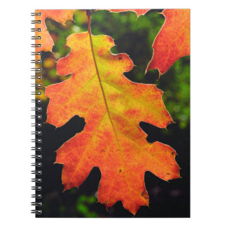 An Oak Leaf in Six Rivers National Forrest Note Book