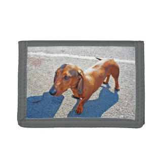 An Obedient Dog Trifold Wallet