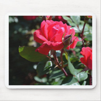 An Old Fashion Rose Garden Mouse Pad