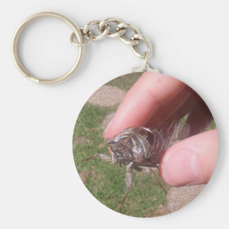 An Old Hesitating Cicada Being Held In Hand Key Chain