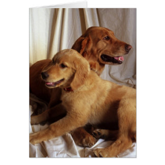 An older Golden Retriever and a puppy against Card