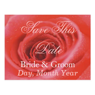 An Open Rose 1 Save This Date Postcards