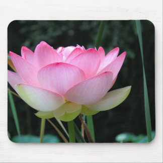 An Opening Lotus Mouse Pad