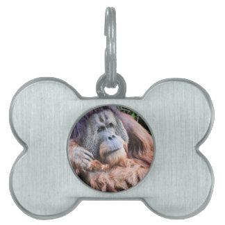 An Orangutan Named Henry Pet ID Tag