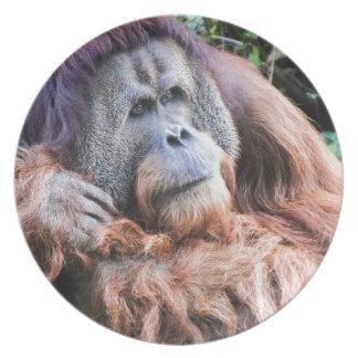 An Orangutan Named Henry Party Plates