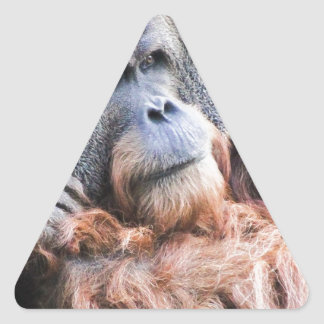 An Orangutan Named Henry Triangle Sticker