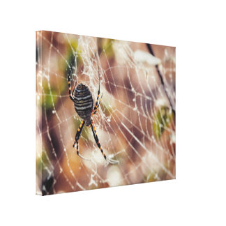 An Orb Weaver Spider on Web During Fall Canvas Print