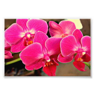 An Orchid Photo Print