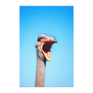 An Ostrich showing aggression Canvas Print