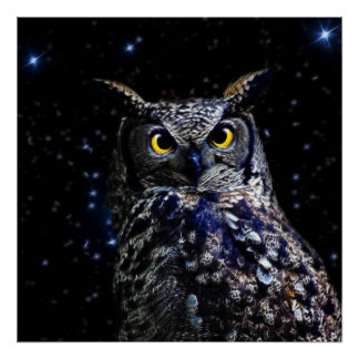 An owl and stars poster