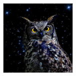 An owl and stars posters
