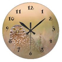 An owl, beautiful wall clock
