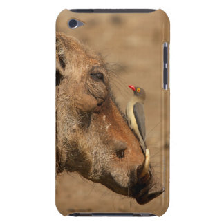 An Oxpecker on a warthogs snout, Isimangaliso, Barely There iPod Cover