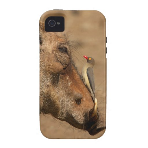 An Oxpecker on a warthogs snout, Isimangaliso, iPhone 4/4S Cases