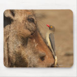 An Oxpecker on a warthogs snout, Isimangaliso, Mouse Pad