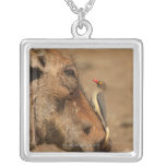 An Oxpecker on a warthogs snout, Isimangaliso, Square Pendant Necklace