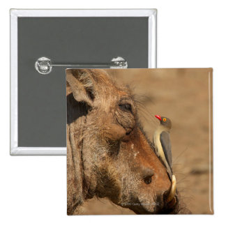 An Oxpecker on a warthogs snout, Isimangaliso, Pinback Button