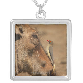 An Oxpecker on a warthogs snout, Isimangaliso, Silver Plated Necklace