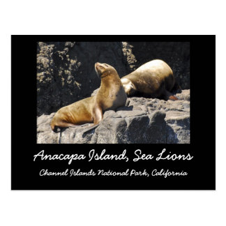 Anacapa Island Sea Lions Post Card