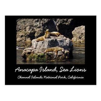 Anacapa Island Sea Lions Post Cards