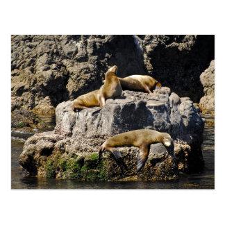 Anacapa Island, Sea Lions Post Cards