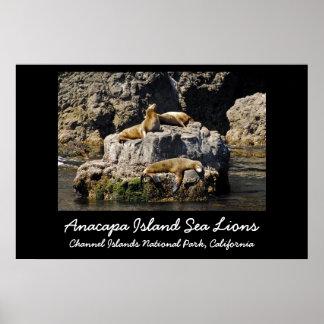 Anacapa Island, Sea Lions.. Print